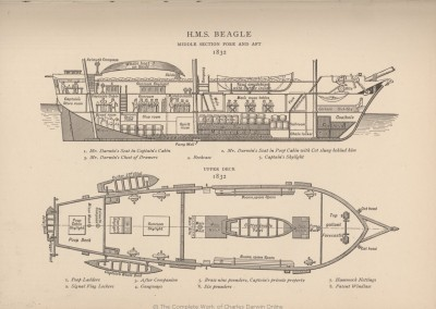 A cross section of HMS Beagle