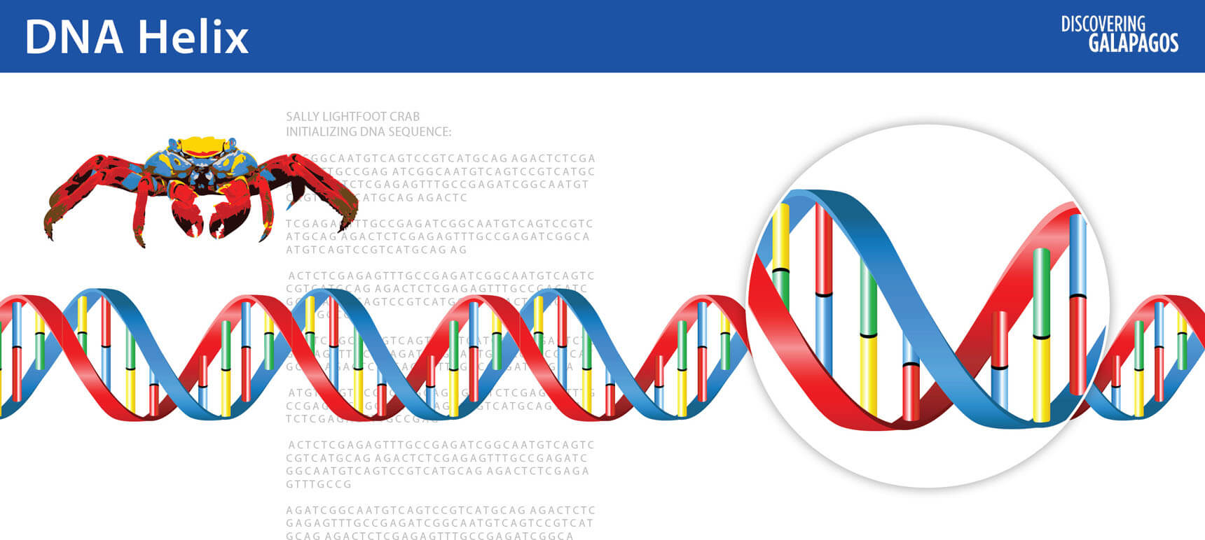 DNA is a molecule in the form of a double helix © GCT