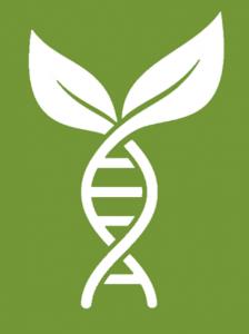Leaf DNA 2 by Krisada