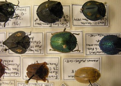 Beetle Collection © Joe Mabel