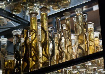 Specimen Jars © Thomas Quine